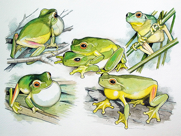 Frogs 2