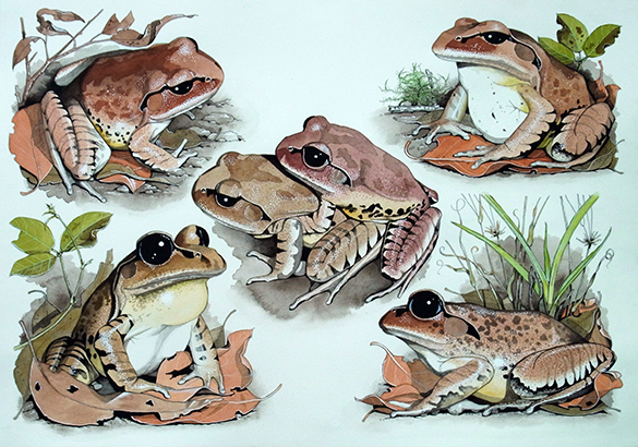 Frogs 3