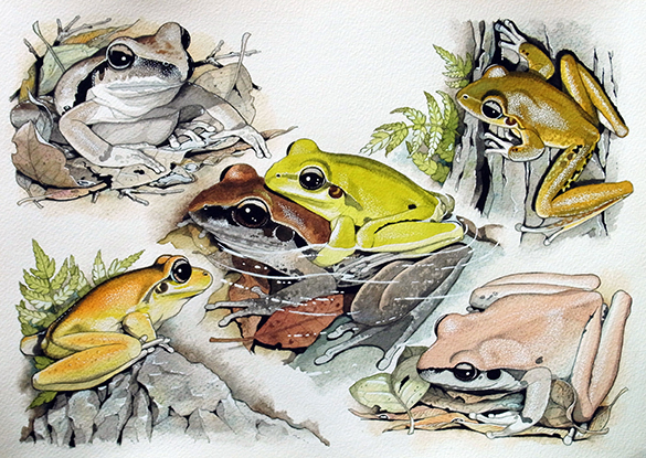 Frogs 4