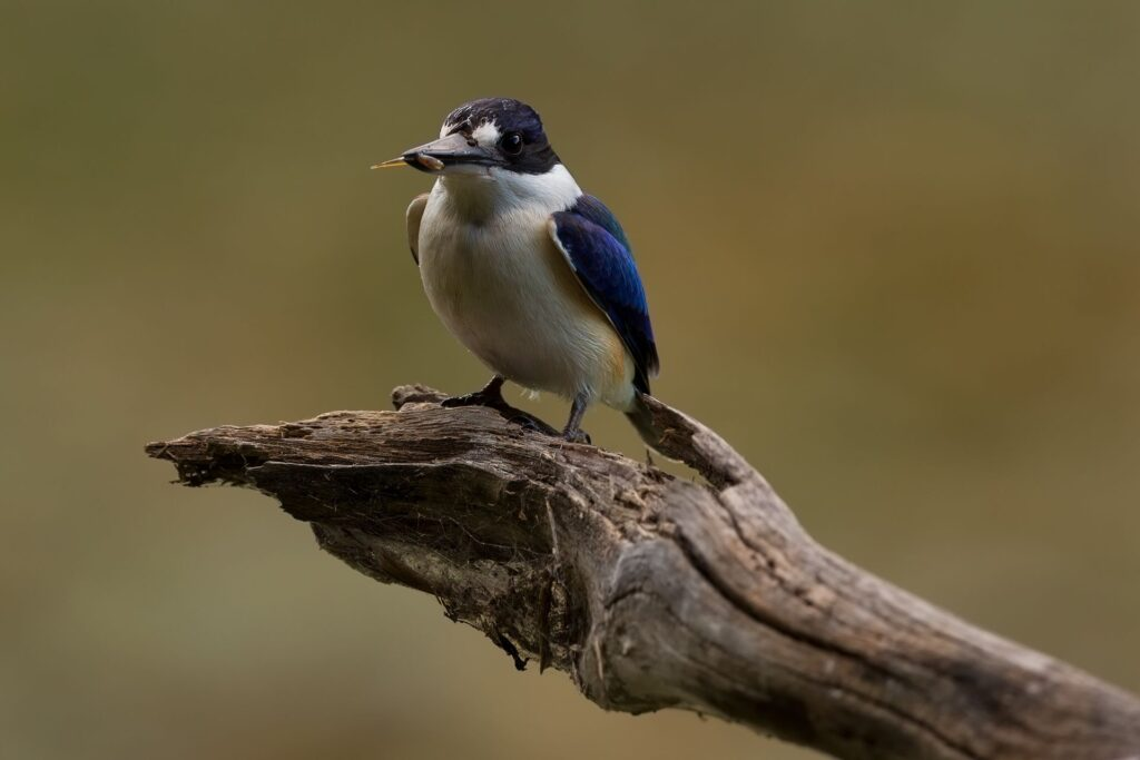 Ross Coupland's bird photography 3