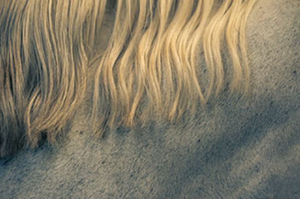 Katrin Benninghoff's Horses 3